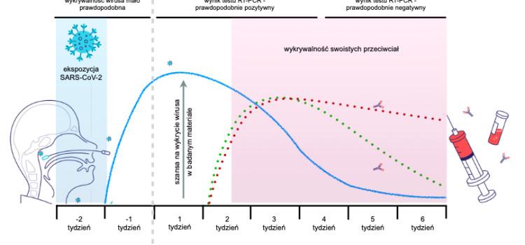 NAUCZYCIELE – ciekawy wykres dotyczący nabywania przez nas odporności w związku z szczepieniami