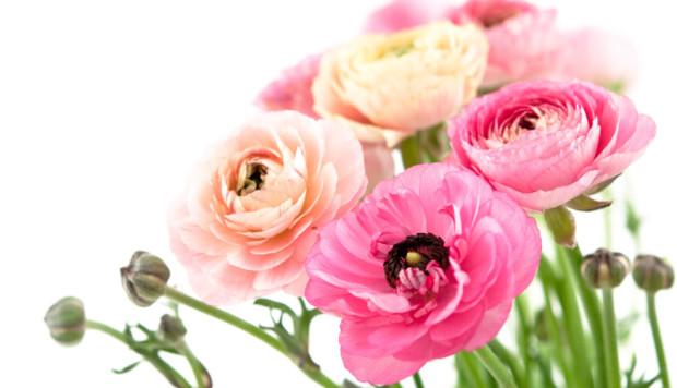 kwiatek_rozowy