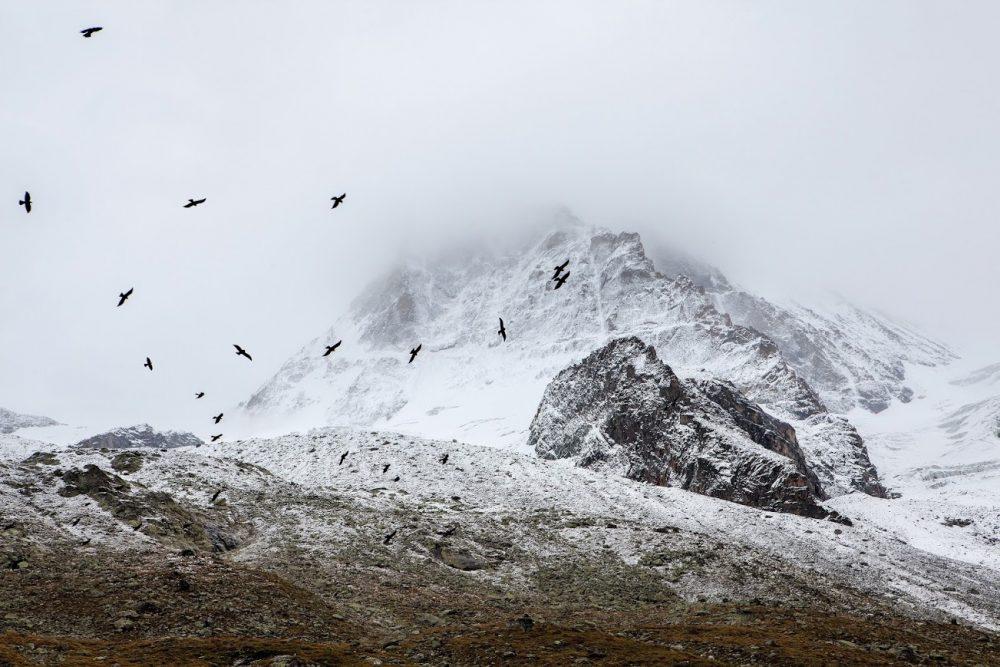 birds-cold-fog-4037
